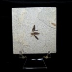 Fly Fossil